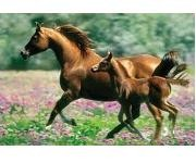 Mare and Foal by Mark Barrett - 500 Pieces Jigsaw Puzzle By Buffalo Games