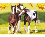 The Yearlings By Mark Barrett- 500 Pieces Jigsaw Puzzle By Buffalo Games