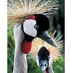Crowned Cranes - 500 Pieces Jigsaw Puzzle by Springbok