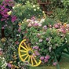 Blooming Cart - 500 Pieces Jigsaw Puzzle by Springbok
