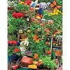 Garden Delights - 1000 Pieces Jigsaw Puzzle by Springbok