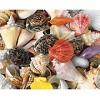 Seashells - 1500 Pieces Jigsaw Puzzle by Springbok